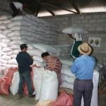 Cotzal Organic Coffee Coop
