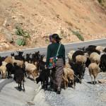 Nebaj girl herding sheep
